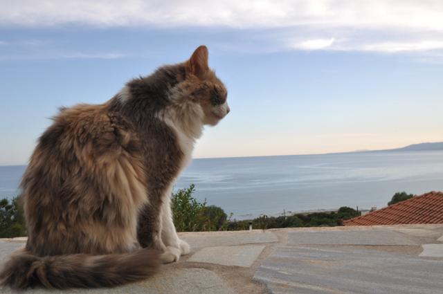 12-villapanorama(cat)